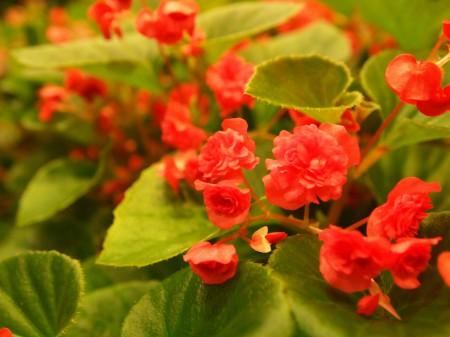 ベゴニアガーデン内の花々