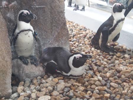 ペンギン(ぐったり)