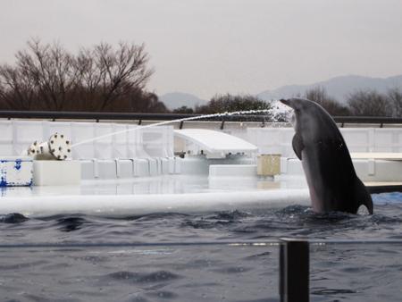 イルカの水飲み