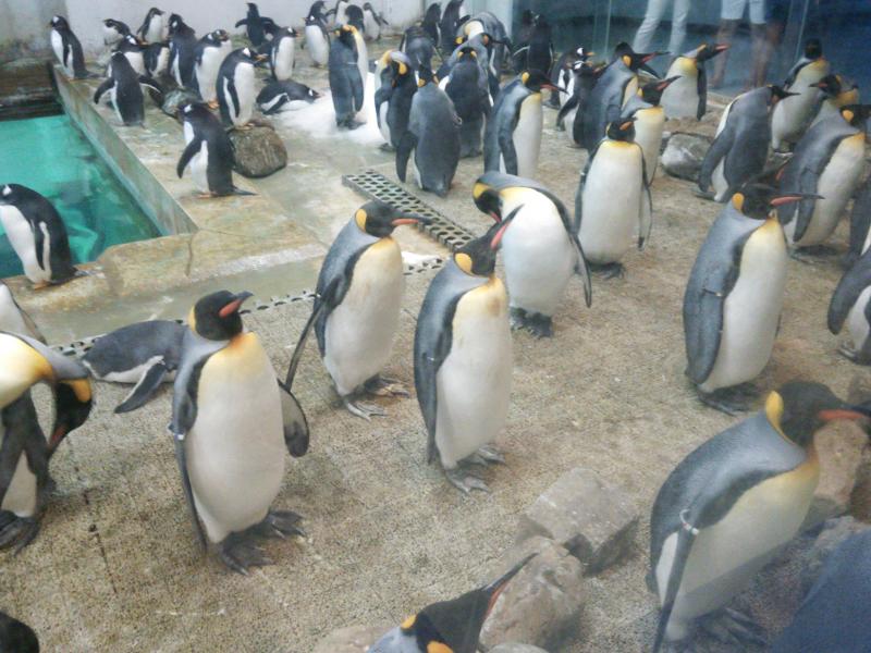 ペンギン王国のペンギンたち